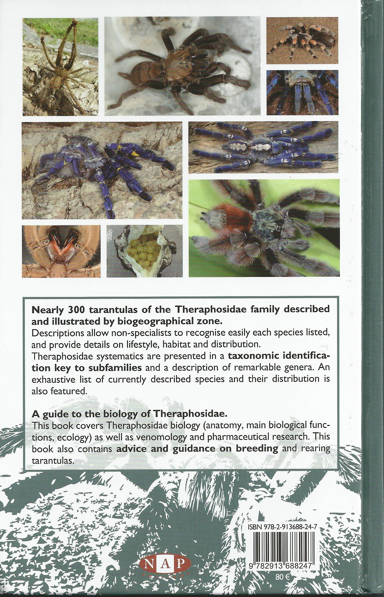 Book Review Tarantulas Of The World By Francois Teyssie Dave