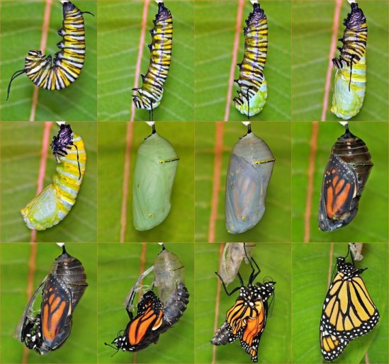 butterfly-hatching-730